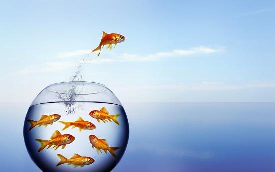 goldfish-smaller