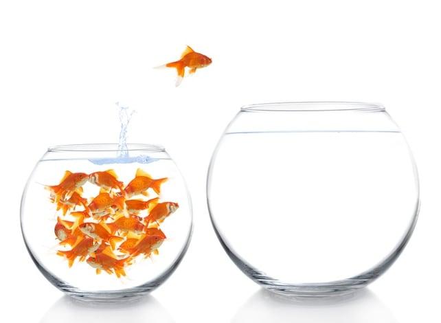 goldfish1-2